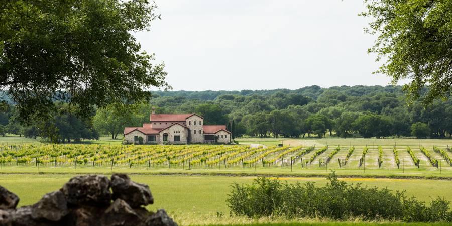 vineyard florence